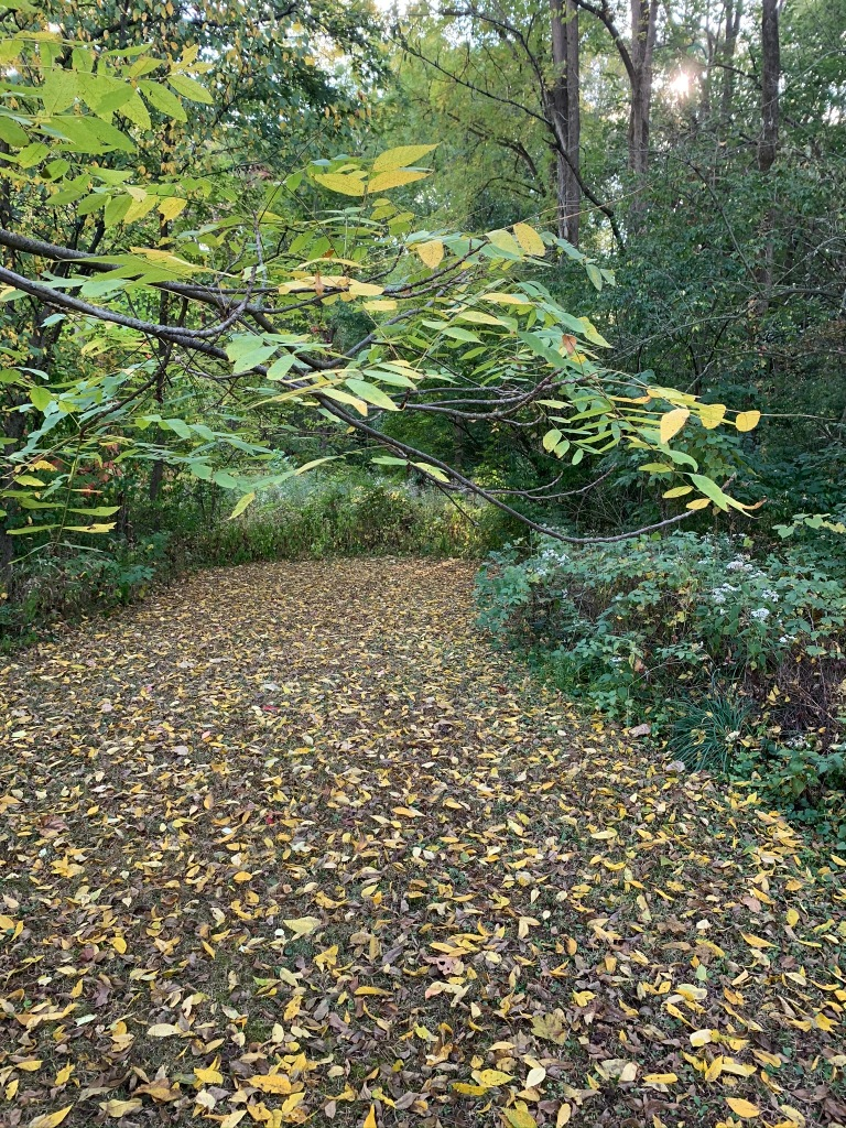 A pathway lined with fallen leaves lead to an enclave of shrubbery and trees.